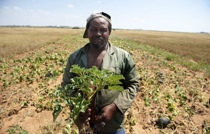 The soil of Bothaville is good to small farmers like Edward Tsoene and larger scale farmers. But the town's unemployment rate remains high.