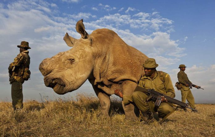Ol Pejeta Conservancy is home to three of the world's last five northern white rhinos.