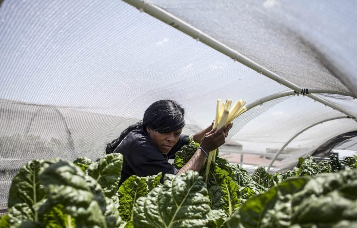 Thandi Ngubeni is a member of the Kotze Rooftop Garden Co-Operative in Hillbrow