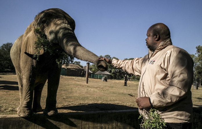 Trunk call: Zoo department manager Piet Malepa says monetary values are placed on zoo animals for the City of Johanesburg's books