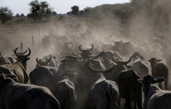 Don't follow the herd: The consumption of meat is increasing despite the damage this does to both the environment and human health.