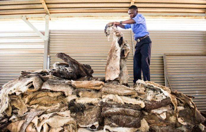 Hide away: Thousands of donkey skins have been found on a plot in Benoni in Gauteng. It is believed they are being exported