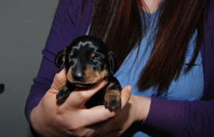 Sooam Biotech said it had cloned the puppy