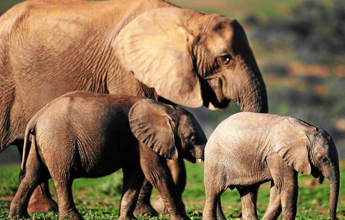 'The killing of 86 elephants