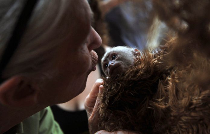 Closer to us than we think: British primatologist Jane Goodall kisses a baby Cariblanco monkey while visiting Chile.