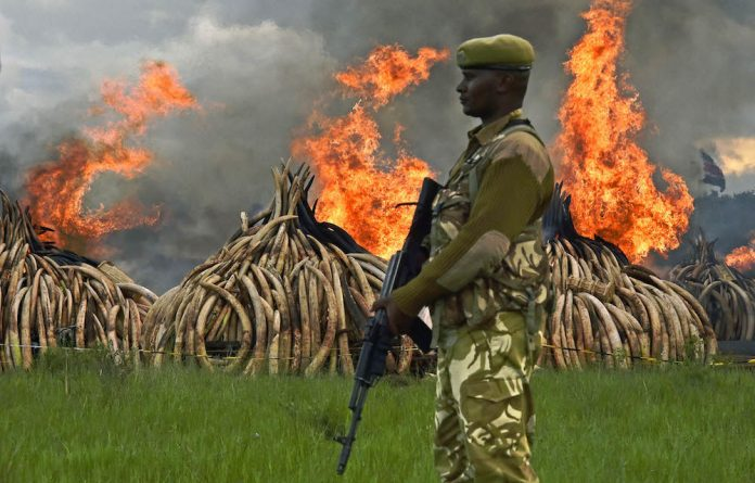 Kenyan President Uhuru Kenyatta set fire to the world's biggest ivory stockpile bonfire in April after demanding a total ban on trade in tusks and horns to prevent the extinction of elephants in the wild.
