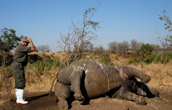An official prepares to conduct a postmortem on the carcass of a rhino killed by poachers for its horn in the Kruger National in August this year.