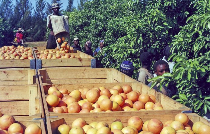 About 40% of South Africa's citrus exports go to the EU