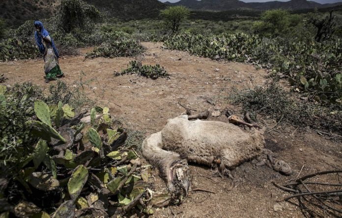 A woman walks past the carcass of a camel that has died due to the severe drought near the town of Qol Ujeed in Somaliland