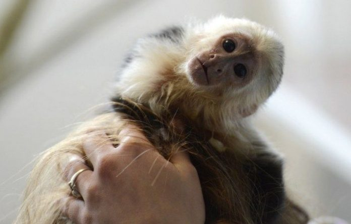 Justin Bieber's monkey Mally