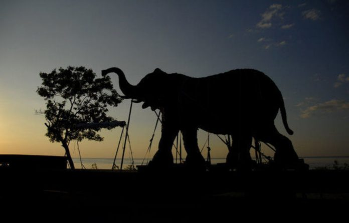 Andries Botha's elephant sculptures have toured the world