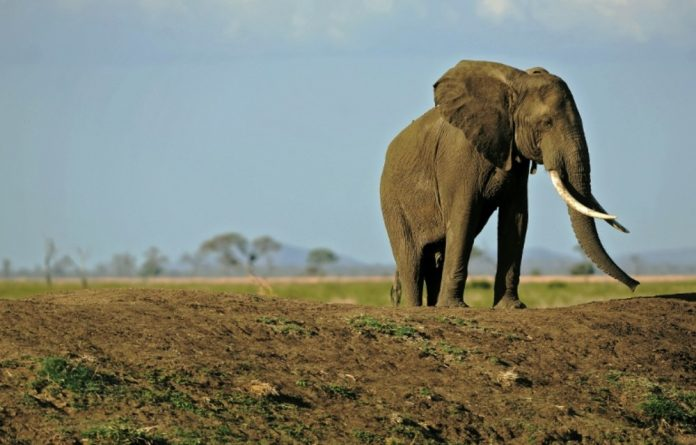 Together Botswana