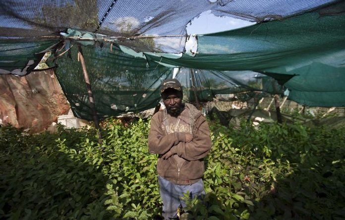 Trees of life: Moses Dlamini has grown 6400 saplings in his yard in Somalia Park