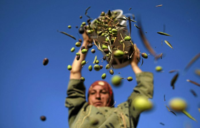 The first shipment of goods from Palestinian farmers is expected in South Africa soon.