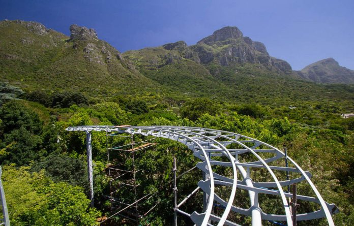 Boomslang: The Walkway at  Kirstenbosch takes a sinuous route above the trees.