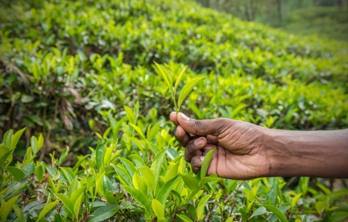 Great growth is possible if small-scale farmers are taken seriously.