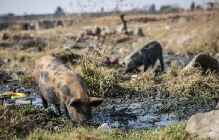 Beyond a crisis: Raw waste