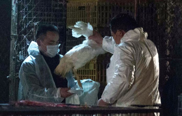 Chinese health workers collect dead chickens at Huhuai wholesale agricultural market in Shanghai.
