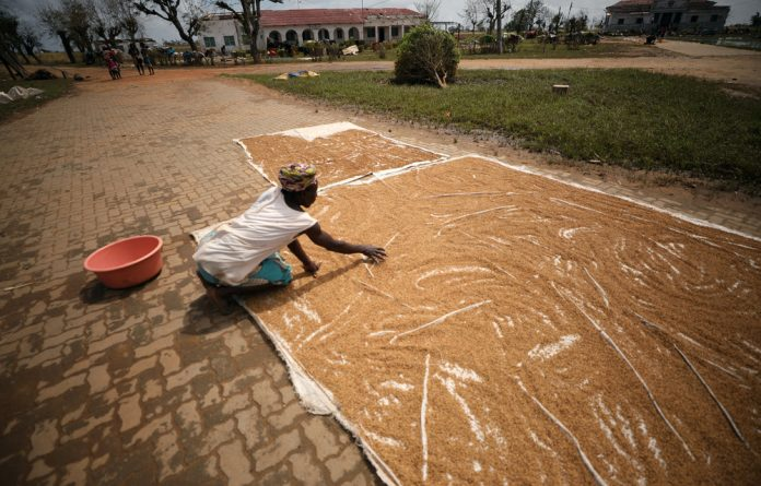 A woman dries rice salvaged as flood waters begin to recede in the aftermath of Cyclone Idai