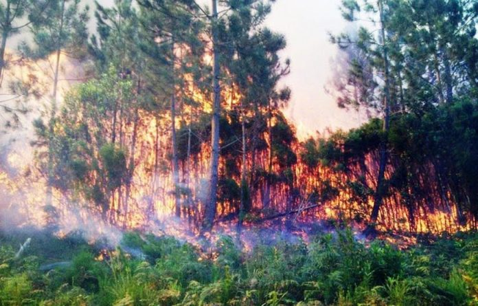 A massive wildfire on the Garden Route fuelled by invasive alien trees.