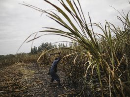 View ahead: The sugar industry in South Africa will need to come up with creative alternative uses