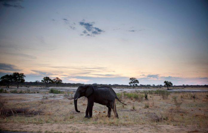 An elephant in Hwange National Park.
