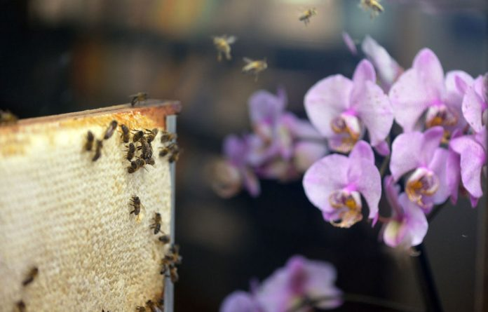 Bee farmers in Vietnam are being forced to change decades of best practice to deal with a changing climate