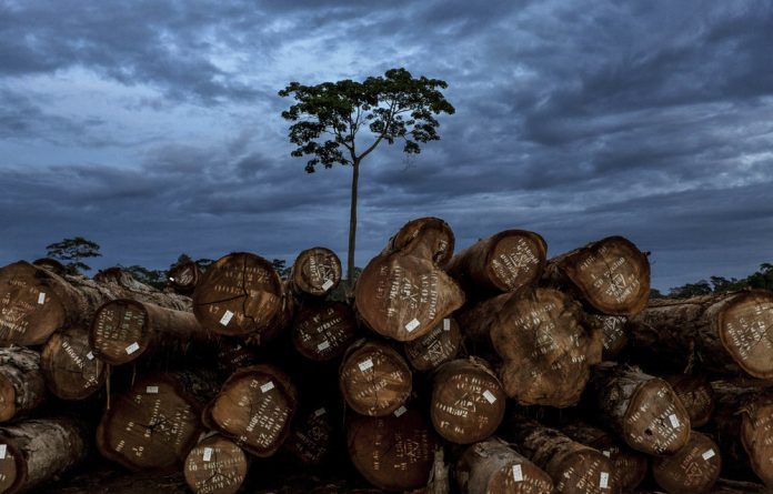 Unrooted: New research shows that Africa is losing trees at an unprecedented rate. Areas of particular concern are the DRC