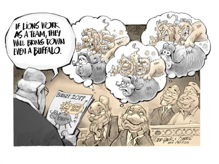 Zapiro: If buffaloes worked as a team...