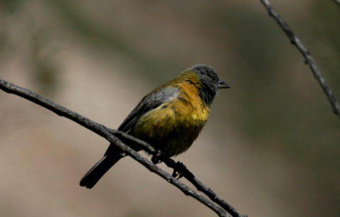 Looking at 11 different bird species