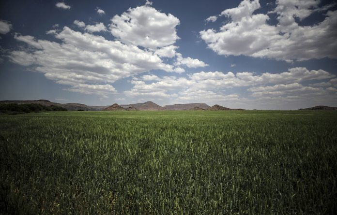 Not enough: The tariff on imported wheat acts as a buffer to protect local farmers when international wheat prices are lower and makes the domestic market competitive.