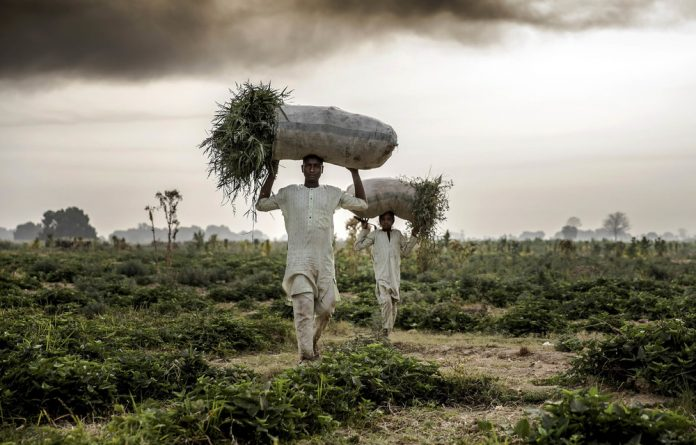 Capital consumption: Hybrid seeds affect true food security and the livelihoods of small farmers and nomadic herders across Africa