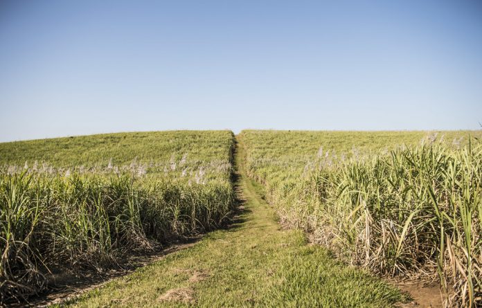 Tongaat Hullet's South African sugar operations cover 119 000 hectares of land