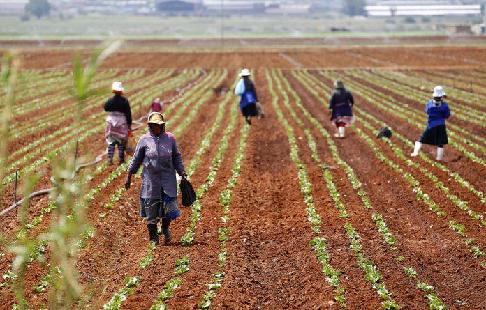 Rain has brought farmers hope of a regular farming season.
