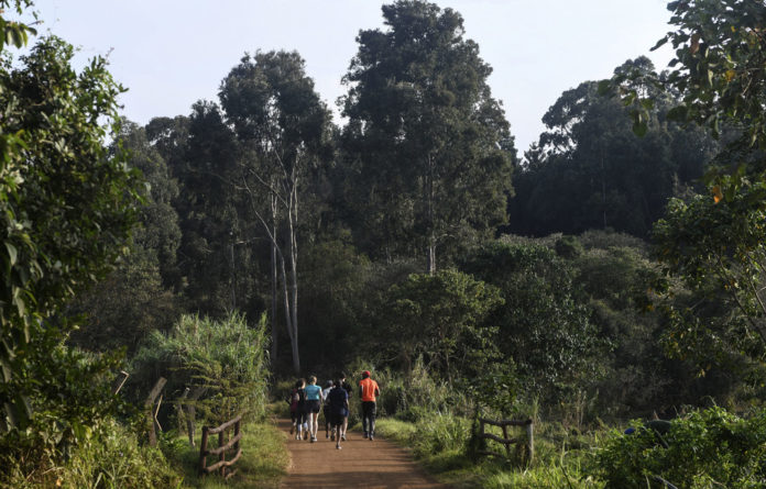 Jogger's paradise: Locals helped turn Karura Forest into a safe
