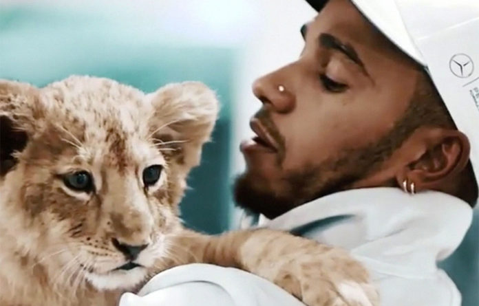 Animal lover: Lewis Hamilton previously drew ire on social media when he posted a picture of himself cuddling a lion cub.