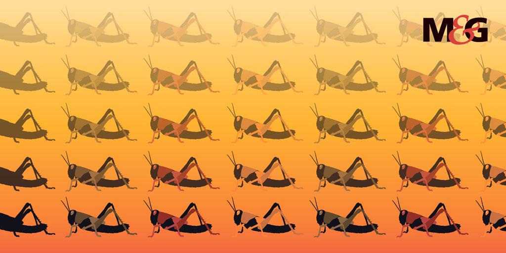 East Africa Locust Swarm Illustration