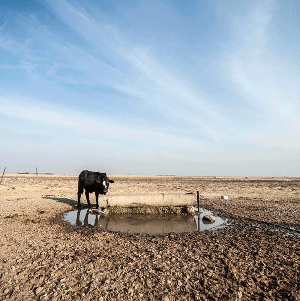 Welkom-Free-State-drought-farmers-cattle-Delwyn-Verasamy-M&G.