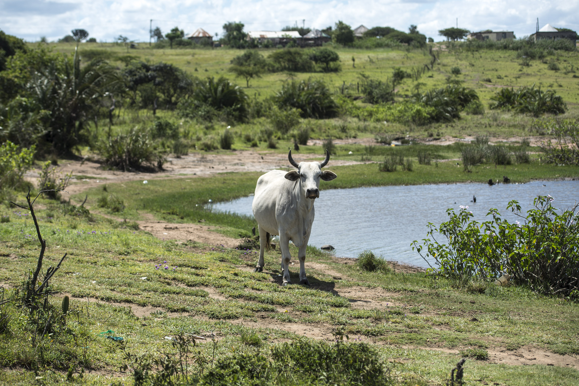Land, slavery and cattle matter: To move forward, we need to look back